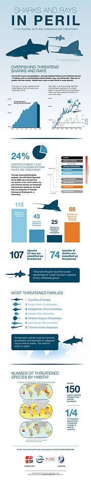 IUCN - A quarter of sharks and rays threatened with extinction