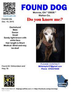 Found Dog - Dachshund - Monroe, GA, United States