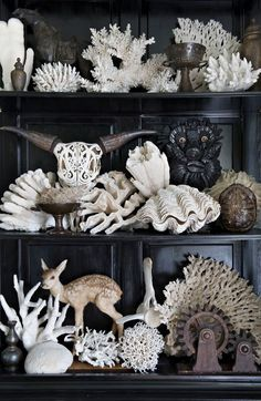 Coral & Shell collection, cabinet of curiosities. Decoration Shabby, Decoration Bedroom, Home Decoration, Back To Nature, Cabinet Of Curiosities, Natural Curiosities, Shell Collection, Vintage Typography, Arte Popular