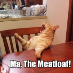 Instagram media by theblue_eyed_fromroffa - She always forgets the damn meatloaf #meatloaf #dinner #food #hungry #igfunny #igfun #lol #lmao #hilarious #humor #fun #funny #funnies #funnycats #sarcasm #sarcastic
