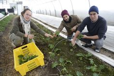 Faire pousser des légumes en hiver dans une région nordique: c'est le défi un peu fou que s'est lancé la coopérative de solidarité Les Artisans paysans. Elle en est à...