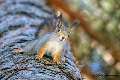 Finland, Animals, Animales, Animaux, Animal, Animais