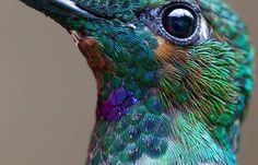 Hermoso colibri volando