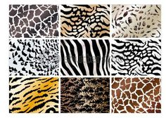 62 Best Animal Prints Images In 2019 Prints Animal