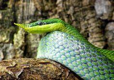 ALLPE Medio Ambiente Blog: La serpiente unicornio verde