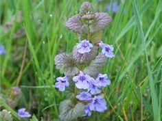 Medicinal Herbs, Health Advice, Flora, Nature, Plants, Gardening, Naturaleza, Lawn And Garden, Plant