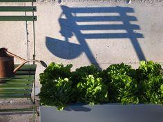 Kjøkkenhage! Beautiful Flowers, Chill, Outdoor Structures, Garden, Plants, Design, Patio, Garten, Pretty Flowers