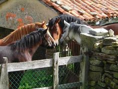 """I'm a horseaddict """"Gurrll, you know he does not appreciate you!""""…"""