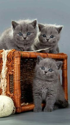 3 kittens in a box, 3 things I am worth fighting for, 3 cats I am going to snuggle with, and cuddle with.