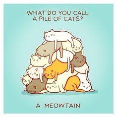 Kitty Cat Hide and Seek Level Creepy ---- hilarious jokes funny pictures walmart fails meme humor wa