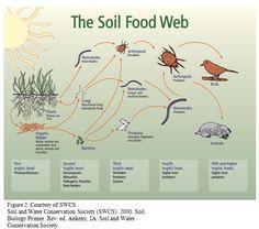 The Soil Food Web #S
