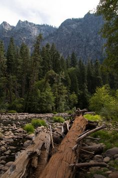 ✯ Yosemite Valley, California ✯ Been here, but I really want to take kids before it becomes extinct* *