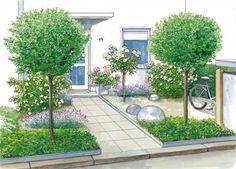 Vorgarten mit Kirschlorbeer-Hochstämmchen