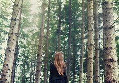 trees-photo by Anna Ådén