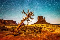 ***Twisted Juniper (Monument Valley) by Robert Biondo on 500px