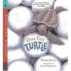 """""""One Tiny Turtle"""" ocean children's book by Nicola Davies, illustrated by Jane Chapman"""