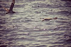 #barca #vela #Ventotene #avvistamenti