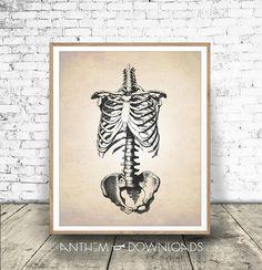 Skeletal Frame PRINTABLE Human Anatomy Art Print Human