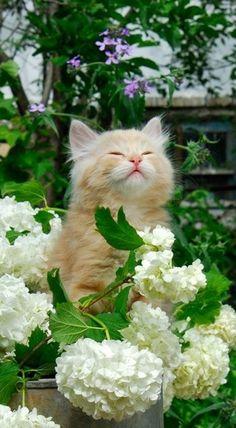 Gatos, maravillosos, son tan hermosos que no hay palabras para describirlos. Dan armonía al sitio donde se instalen ....