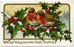 vintage Christmas postcard,  bird clip art, bird holly berries illustration old fashioned Christmas card, birds on branch clip art