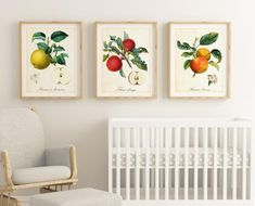 Apple Illustration, Botanical Illustration, Botanical Wall Art, Fruit Print, Extra Large Wall Art, Paper Dimensions, Original Image, Fine Art Paper, Printable Wall Art