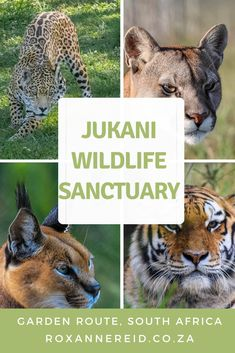 Why to visit Jukani Wildlife Sanctuary near Plettenberg Bay, Garden Route #GardenRoute #Wildlife #sanctuary