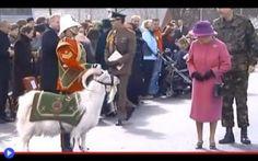 Il caprone che offese la regina Elisabetta II Tutto accadde il 16 giugno del 2006, durante le celebrazioni tenutasi a Cipro per il suo ottantesimo compleanno. Lei, raggiante nel suo abito e copricapo rosa fuchsia, perfettamente abile nel suo ruo #animali #inghilterra #storia #capre