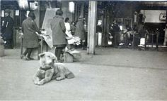 Rare Photo Shows Legendary, Faithful Dog Hachiko Relaxing in His Local Train Station