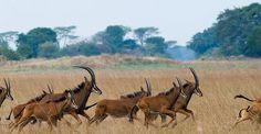 Shumba Camp, Kafue National Park, Zambia | Wilderness Safaris