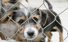 This is your LAST WEEK to tell the U.S. government how terrible puppy mills are! Give your two cents NOW!