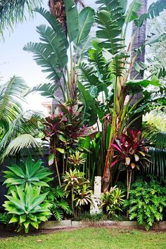 """We were influenced by the many lush tropical gardens in our coastal neighbourhood and overseas, too,"""" she says. """"Tropical plants are also amazingly hardy. It also helps that Bilgola is full of red volcanic soil so everything grows really well!"""""""