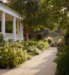 How To Grow Happy Hydrangeas