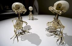 "Skeletons of Huey, Dewey, and Louie in a series called Animatus by artist Hyungkoo Lee, who uses casts to make ""skeletons"" of cartoon characters."