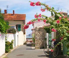 Île de Ré, France. Holly Hocks everywhere.