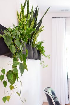 """Updates Around the Studio (""""slowly, they began to wilt. No amount of water, singing or pleading could revive them, and so, we began swapping them out with plants that are black thumb friendly.  By the start of this year, our pocket made its full transition to Pothos, Philodendron and ZZs, while the snake plants (Sansevieria) continue to grow and grow (and grow!). All of them have nearly doubled"""")"""