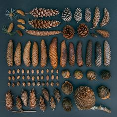 Emily Blincoe creates beautiful photos of everyday objects and food based on size, shape and color. Check out her photos of everyday objects arrangements. Collections Of Objects, Displaying Collections, Things Organized Neatly, Nature Collection, Pine Cone Crafts, Seed Pods, Everyday Objects, Wabi Sabi, Pine Cones