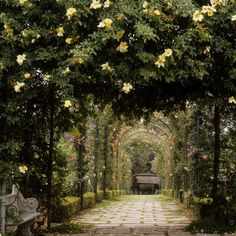Arched trellis garden, complete with stone benches. Reminds me of a certain scene in the movie 'Ever After.' :)