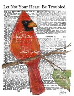 F R E E  Shipping  print  Male Red CARDINAL by gaylemontayostudio