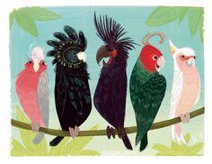 The Art of Steph Laberis. — Cockatoo Family Reunion Signed Print (Various Sizes Available) Australian Animals, Australian Art, Tropical Birds, Exotic Birds, Bird Illustration, Illustrations, Pink Cockatoo, Bird Artwork, Bird Drawings