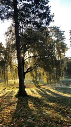 Beautiful Nature Scenes, Beautiful Nature Wallpaper, Amazing Nature, Beautiful Landscapes, Trees Beautiful, Scenery Photography, Landscape Photography, New Background Images, Autumn Scenes