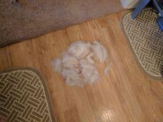 Get a husky they said.  Big and fluffy, they said...