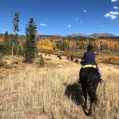 Dog Ram, Cannabis, Colorado, Campaign, Urban, In This Moment, Group, Travel, Aspen Colorado