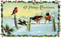 cartão natal antigo 1913, robin -- pintarroxo, no galho de azevinho
