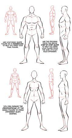 Human Anatomy For Artists, Human Anatomy Drawing, Anatomy Art, Figure Drawing Reference, Anatomy Reference, Art Reference Poses, Body Drawing Tutorial, Sketches Tutorial, Anatomy Sketches