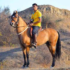 Kathiyawadi Horse, Horses, Horse Breeds, Westerns, Unique, Animals, Animales, Animaux, Animal