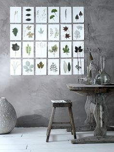love both the concrete walls and the pressed flowers categorized on the wall - a catalogue of there findings?..