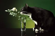 Photograph Cat & Flowers 4 by jb make on 500px