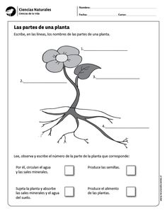 Visit the post for more. Science Worksheets, Dual Language, Nature Plants, Science And Nature, Grade 1, Homeschool, Classroom, Teaching, Education
