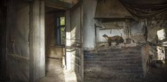 Animal-families-in-abandoned-wood-cottage-5.jpg (800×398)
