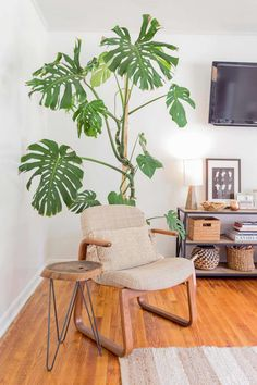 How to Care for Monstera Plants - A Beautiful Mess
